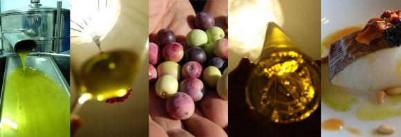 Curso temático cata de aceite de arbequina