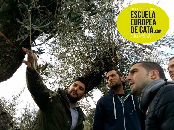 Curso olivicultura y poda