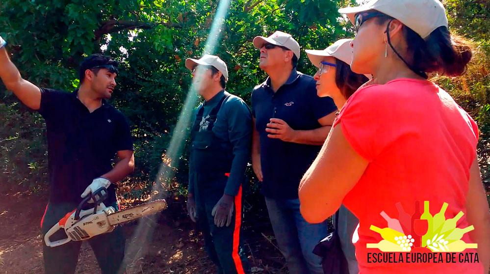 Curso Olivicultura para la excelencia y Poda práctica: Iniciación en el manejo del olivar dirigido a la obtención de aceites de oliva virgen extra de calidad