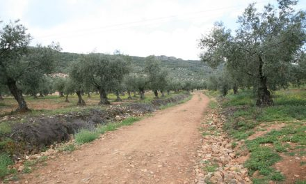 Oleoturismo en Badajoz: D.O.P. Aceite Monterrubio