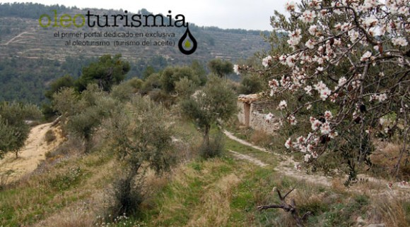 la-olivera-lleida-aceite-de-oliva-virgen-extra-1