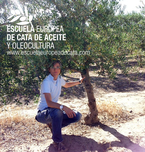 Mar Luna, Directora de la Escuela Europea de cata y Oleocultura en la finca de experimentacion de olivar del IMIDRA en Aranjuez