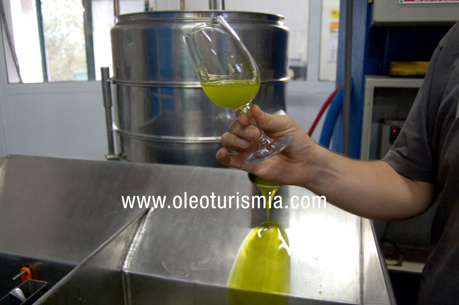 Los polifenoles del aceite de oliva virgen extra protegen de enfermedades cardiovasculares