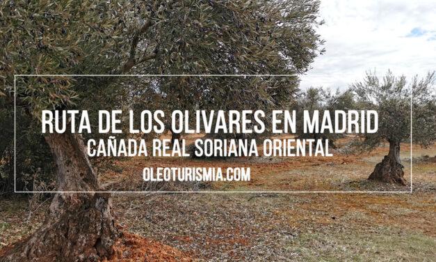 Oleoturismo Madrid: Valdaracete