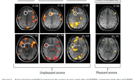 El CSIC estudia mediante neuroimagen las percepciones olfativas agradables y desagradables de aceites de oliva virgen